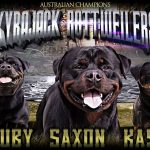 Kyrajack Rottweilers